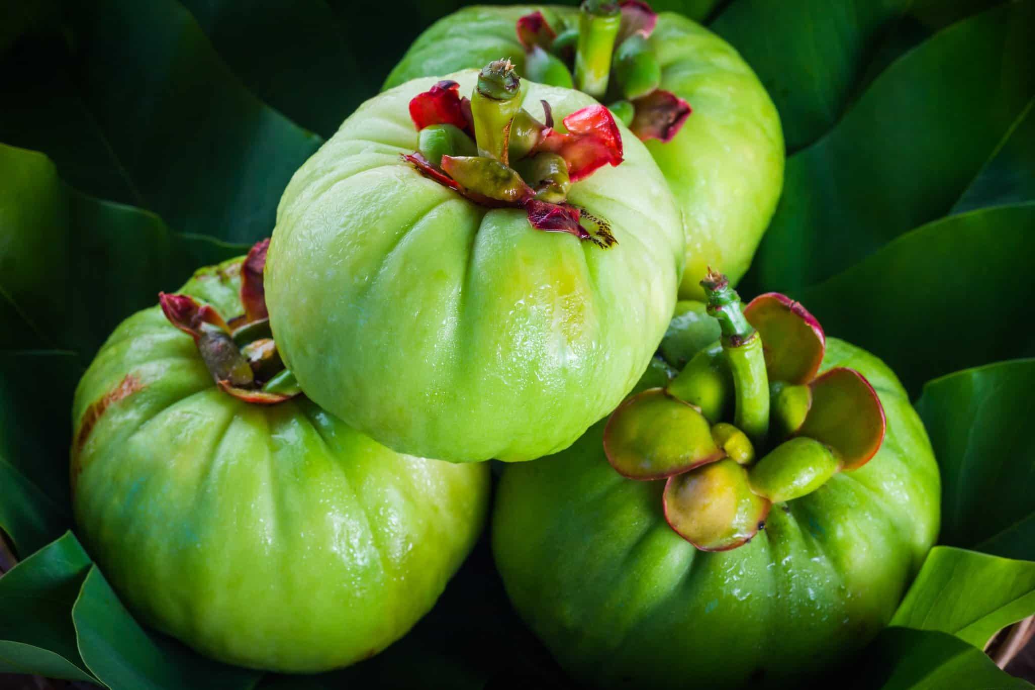 Fruta de la Garcinia Cambogia