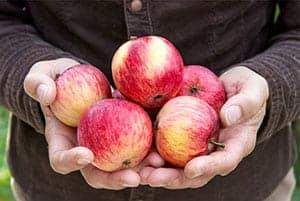 Puñado de manzanas