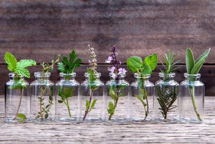 hierbas-en-jaras