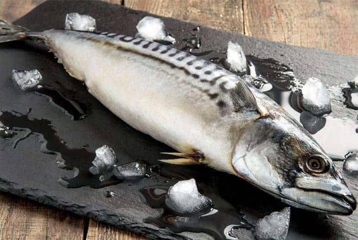pescado-grasoso